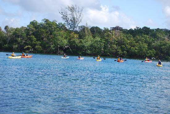 Spanish River Paddle Company: Eco Tour