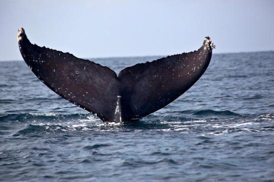 Ocean Friendly Whale Watching Tours: Taken during my tour with Ocean Friendly tours