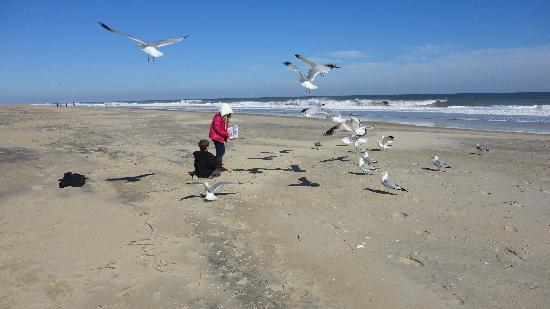 Princess Royale Resort : Feeding the seagulls on another gorgeous day!