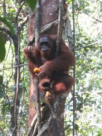 Semenggoh Nature Reserve: Breakfast...