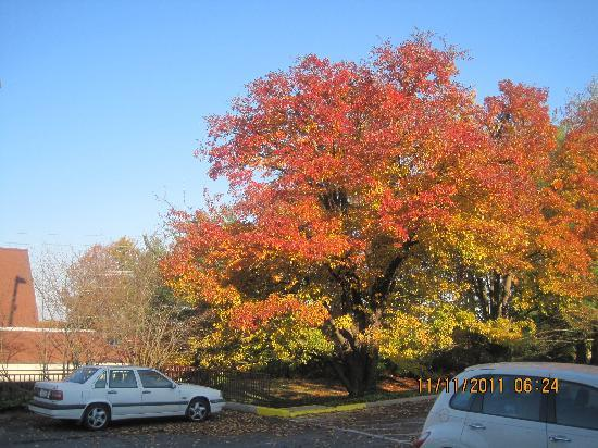 Red Roof PLUS+ Washington DC-Rockville: View:Gorgeous Fall trees from room