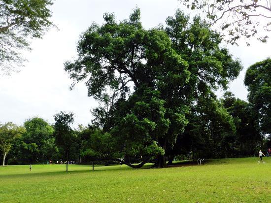 Singapore Botanic Gardens: 02