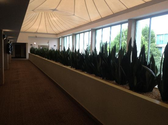 Rydges Capital Hill Canberra: Indoor Plants