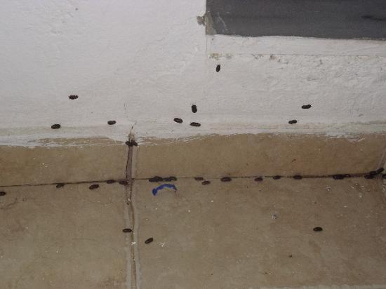 Panorama Village & Hotel: insects outside room that entered room at night