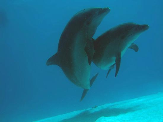 Div'Ocean: Dolphins