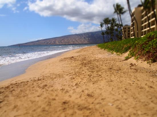 Kihei Sands Beachfront Condominiums: Beautiful, uncrowded beach.