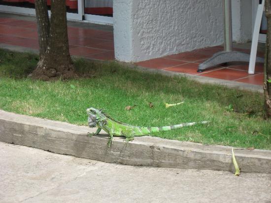 LD Le Flamboyant: Hotel iguana