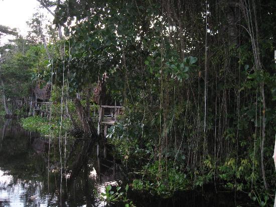Mis Palafitos Lodge : Pure nature