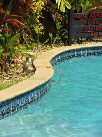 Salybia Nature Resort & Spa: Cord in pool