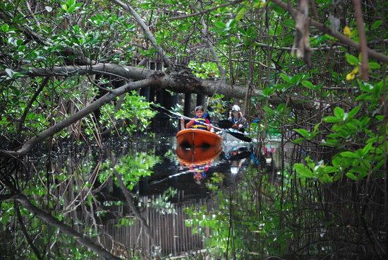Spanish River Paddle Company: Mangrove Tour