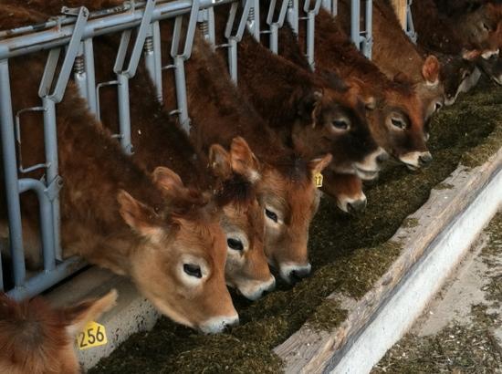 Lapp Valley Farm: Happy cows make good milk!