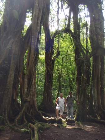 Seminyak, Indonesia: Check out this tree