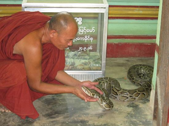 Snake Pagoda (Hmwe Paya): The residing monk and one of the resident snakes