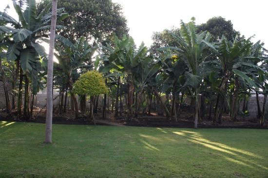 "Kundayo Serviced Apartments Lodge: View of banana ""garden"" from restaurant"