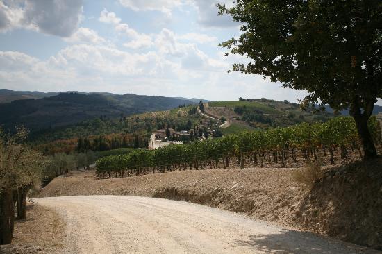 Villa Cafaggio : Arrival to Villa Caffaggio - Scenery suitable for postcards