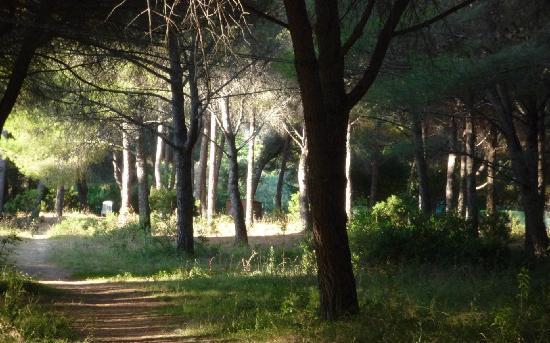 Hotel Giardino: giardino favoloso