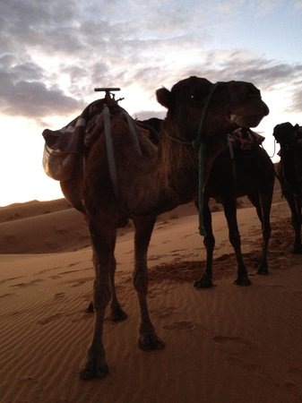 Casablanca, Marokko: Sahara
