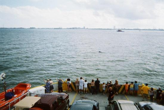 Galveston - Port Bolivar Ferry: Watching dolphins