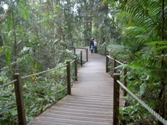 World Heritage Kuranda Tour-AAO: 途中立ち寄るエリア。自然の森林を散策できます。