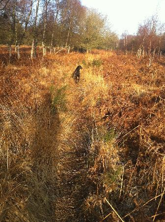 Hartwood House: Sadie leads me on a walk through the fields, into the woods.