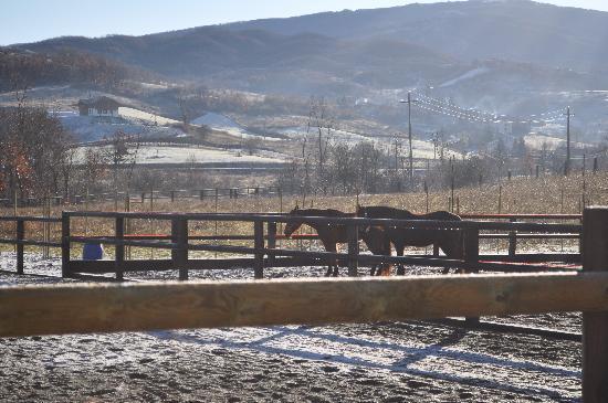 Cascina Ca Bella : horses