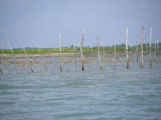 Chilika Lake: Prawn & Crab traps in Chilka Lake