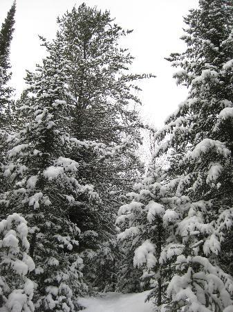 National Forest Lodge: Snowshoe trails