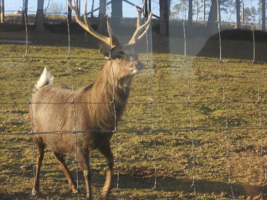 Auberge de la Ferme: visite du parc animalier