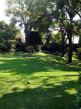 Las Mananitas: Pool garden