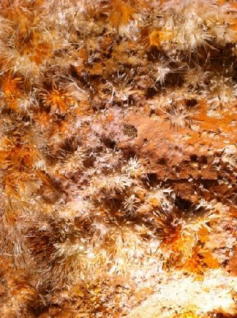 anthodites, growing on the ceiling of the caverns