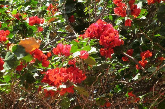 La Casa de Liza: bougainvillea everywhere