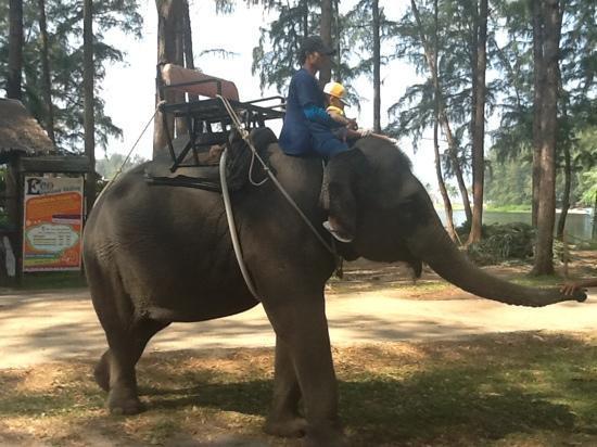 Angsana Laguna Phuket : Elephant Rides