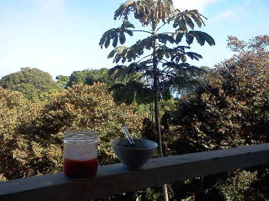 Pavones Yoga Center : Breakfast and view from my room <3