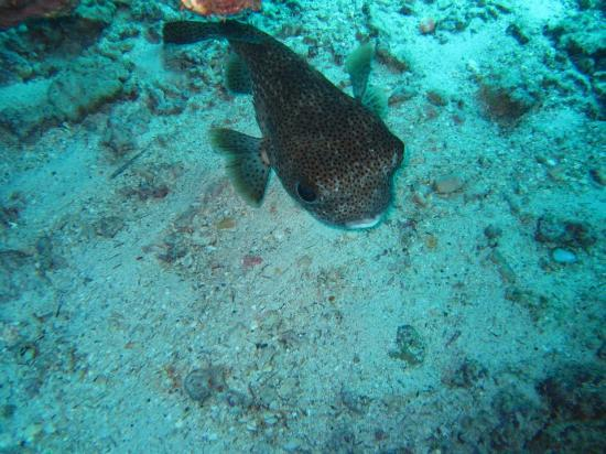 Blue Wilderness Dive Adventures : Cute!