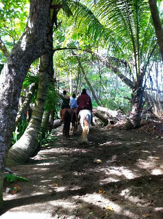 Cabarete Maravilla Eco Lodge & Beach: Horseback riding on the trail next to the property