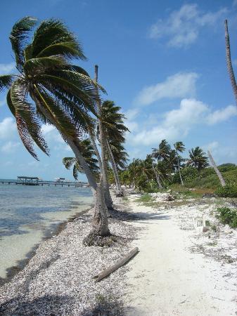 San Pedro, Belize: palmeras