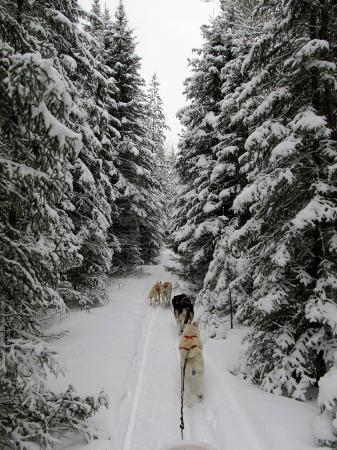 White Wilderness Sled Dog Adventures - Day Tours: Picture-perfect snow-covered trees