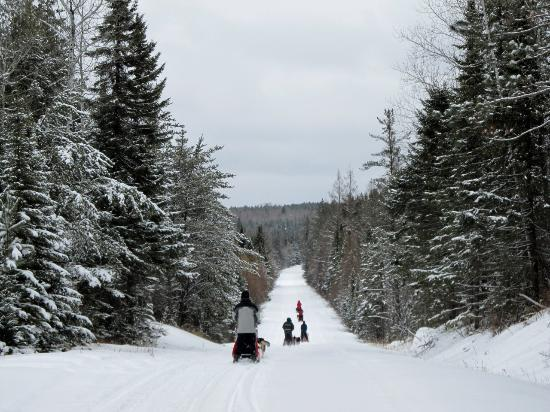 White Wilderness Sled Dog Adventures: Great family activity - beautiful vistas!