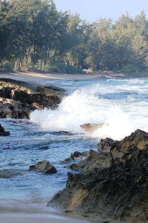 Turtle Bay Condos : Resort beach area