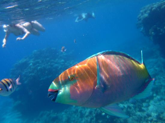 Hilton Sharks Bay Resort: im Meer