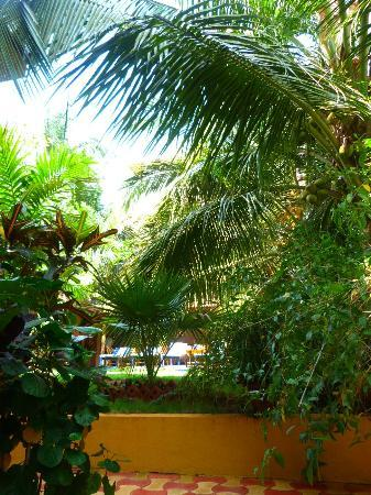 Bougainvillea Guest House Goa: View of garden from terrace
