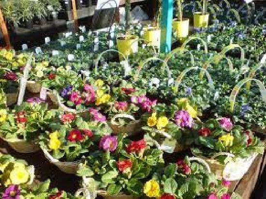 Poplar Tree Garden Centre & Coffee Shop: Outdoor Planting Area