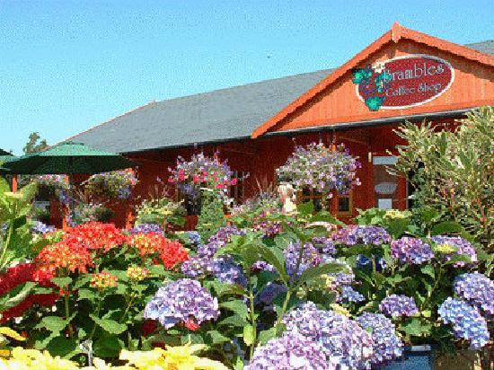 Poplar Tree Garden Centre & Coffee Shop: Brambles