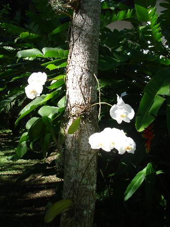 Pousada Picinguaba: Orchids on all the trees - so pretty