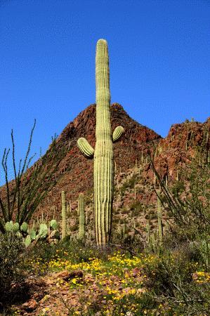 Sonesta ES Suites Tucson: Saguaro National Park