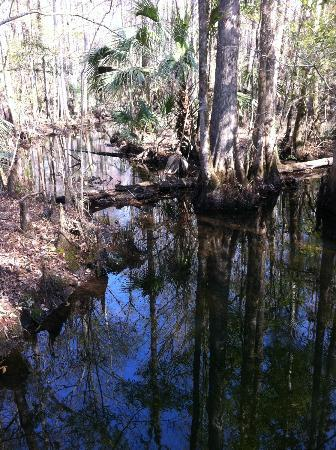 Rice Creek Conservation Area: Rice Creek