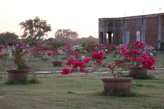 The castle's rose garden