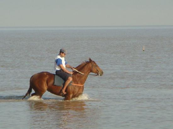 Rio de la Plata: Training Race Horses