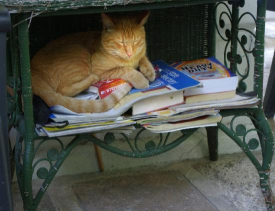 """griffin s review of ernest hemingway s cat Griffin's review of ernest hemingway's work """"cat in the rain"""" was an interesting one his views about the work were not agreed upon by all authors in his view both hemingway and his wife were suffering from depression at the time."""