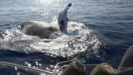 Reel Lucky Fishing Charter: The Humpback waving goodbye after interupting our fishing.